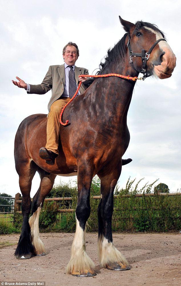 عکس/ اسب یک تنی و سه متری