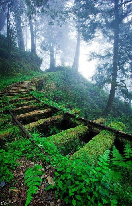 عکس/ زیباترین خط ریلی جهان