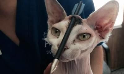 عکس/ نجات معجزه آسای گربه نادر از مرگ