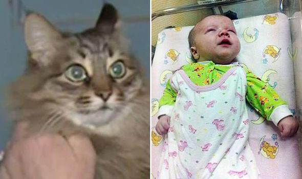 مهربان ترین گربه دنیا +عکس