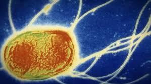 مرگبارترین باکتریهای دنیا +تصاویر