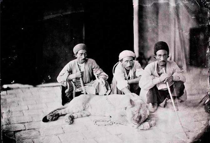 عکس/ رام کردن شیر به سبک قاجار