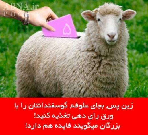 تقلب در انتخابات به شیوه گوسفندی + عکس