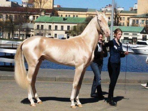 زیبا ترین اسب دنیا + عکس