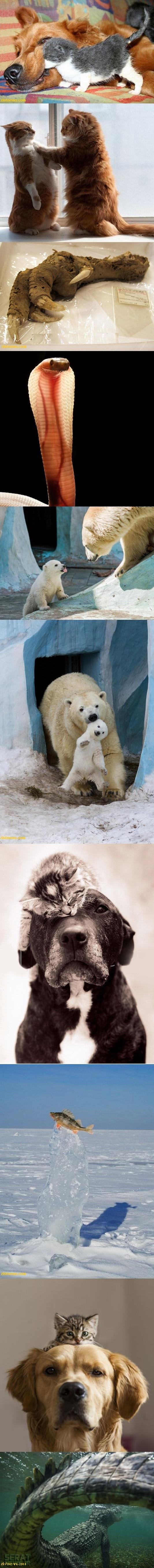تصاویر / حیوانات/ بدون شرح