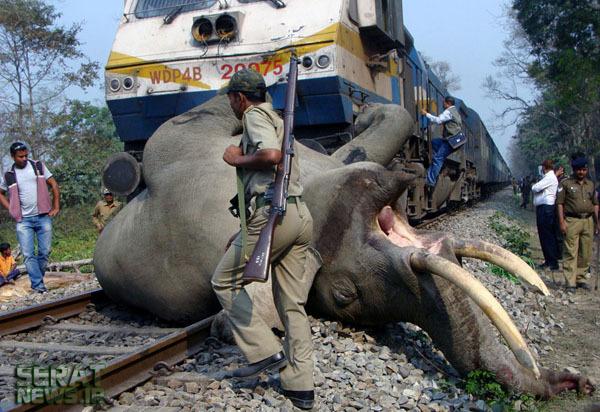 تصادف قطار با یک فیل + عکس