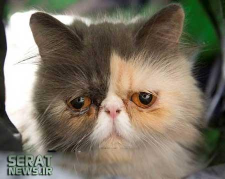 عکس/ غمگینترین گربه جهان!