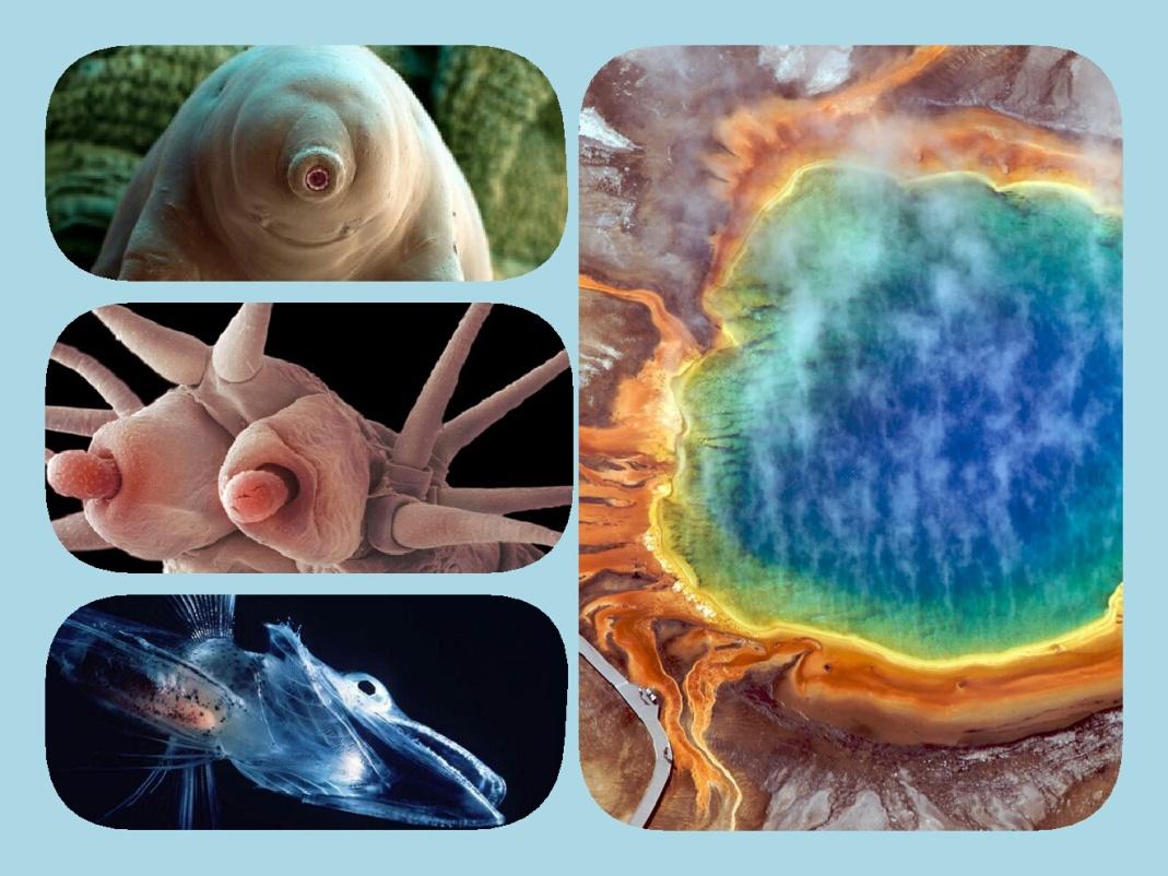 جان سختترین موجودات زمین+تصاویر