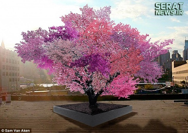 درختی که ۴۰ نوع میوه میدهد +عکس