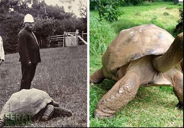 تصاویر/ لاکپشت غولپیکر ۱۸۲ ساله