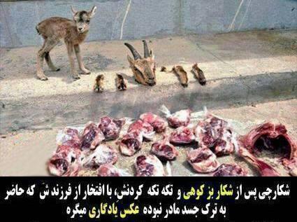 عکس / بیرحمی شکارچی