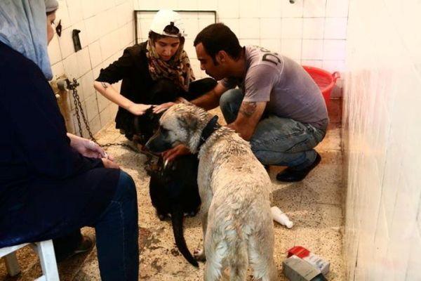 پذیرایی از سگها با کلهپاچه در تهران! +تصاویر