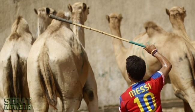عکس/ شترچرانی مسی در مصر!