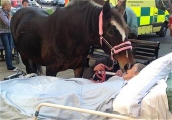 عکس/ وداع یک اسب با صاحبش