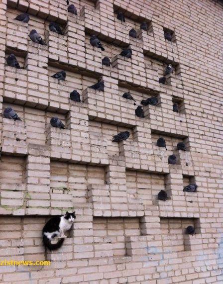 عکس/ خوشنشینی گربه روی دیوار