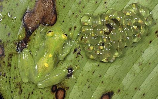 کشف موجودی عجیب در اکوادور+تصاویر