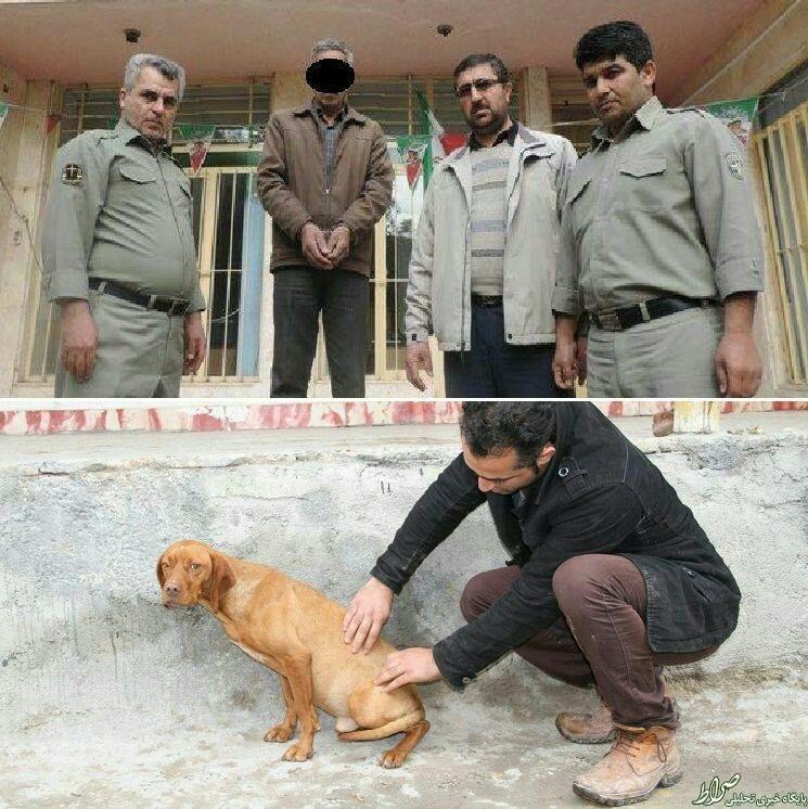 بازداشت مردی که سگی را به قصد کشت زد +عکس