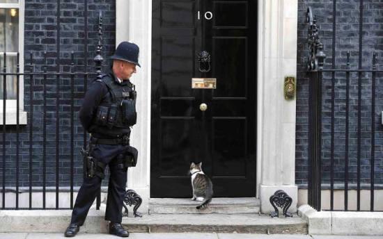 عکس/ گربه مخصوص آقای نخست وزیر
