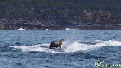 موجسواری فک روی نهنگ! +عکس
