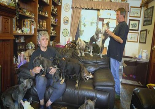 هم خانگی زوج با 41 سگ +تصاویر