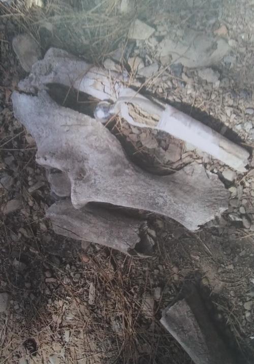 ماجرای تکههای استخوان درپارک+عکس
