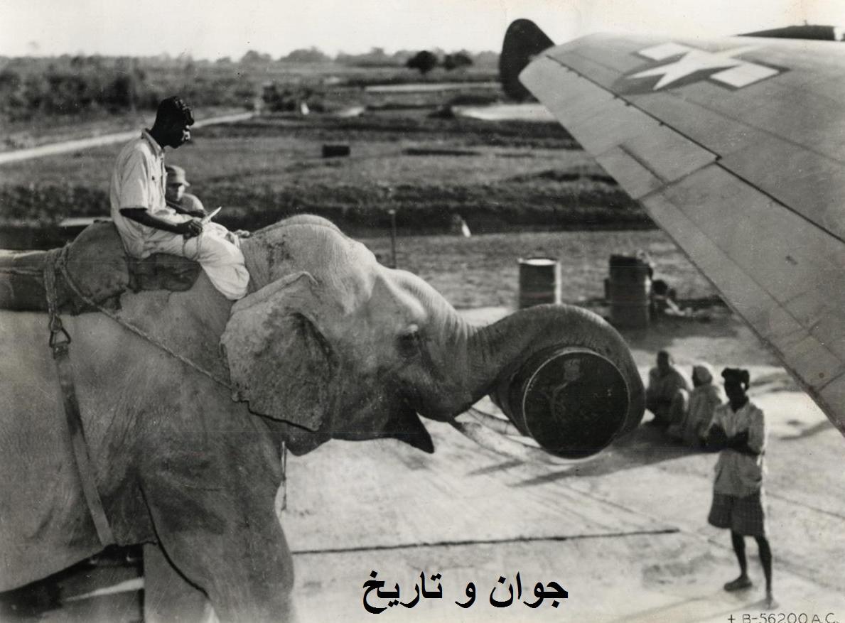 عکس/ بارگیری هواپیما توسط فیل