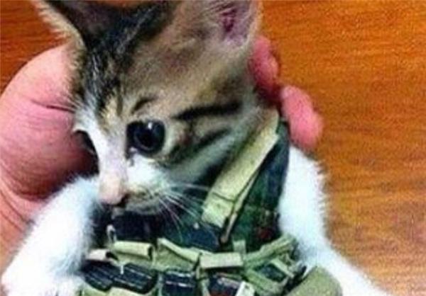 عکس/ گربه انتحاری داعش