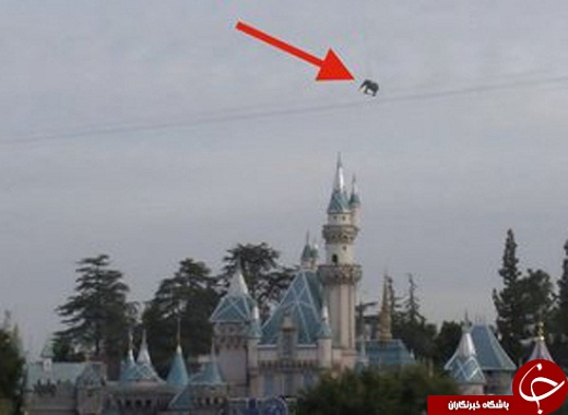 این فیل در آسمان به پرواز آمد+ عکس
