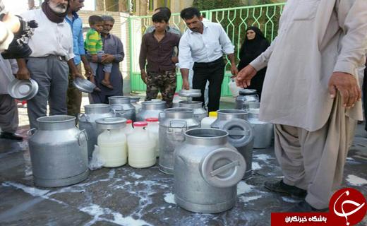 شیر هایی که بر زمین ریخته شد +تصاویر