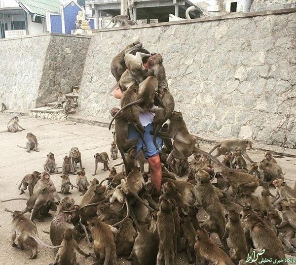 عکس/پذیرایی متفاوت میمونها از یک توریست!