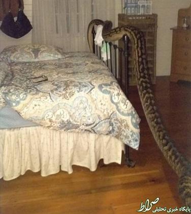 ورود مار 5.2 متری به اتاق خواب +عکس