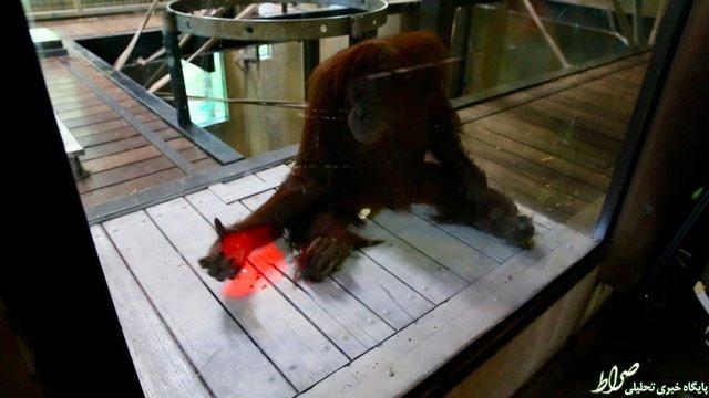 ایکسباکس بازی میمونها +تصاویر