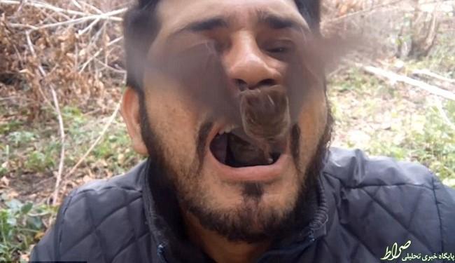 فعال محیط زیست دو خفاش را زنده بلعید!+عکس