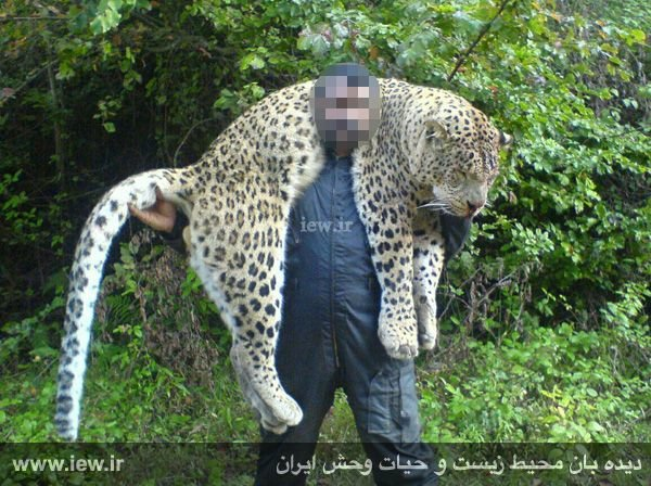 حکم قاتل پلنگ سوادکوه صادر شد +عکس