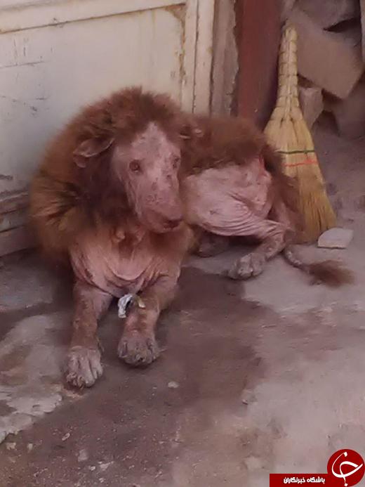 عکس/ پیدا شدن حیوانی عجیب در ملایر