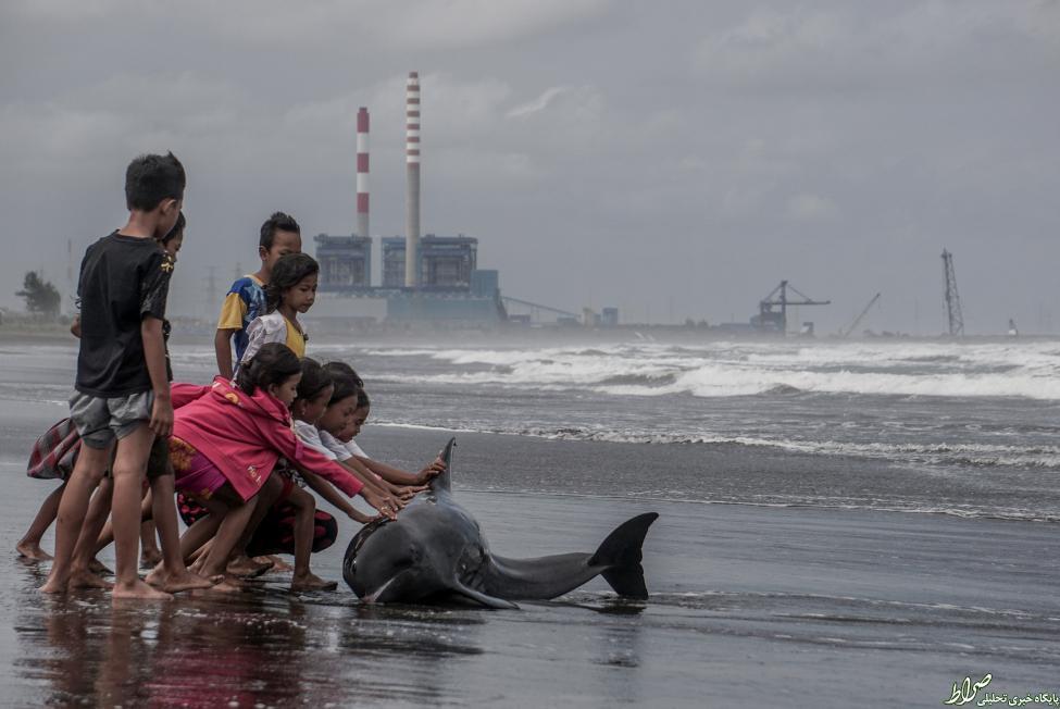 عکس/کمک کودکان به دلفین گرفتار در ساحل