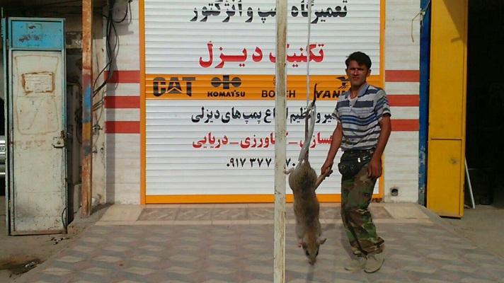 عکس/ شکار موش 27 کیلویی در بوشهر