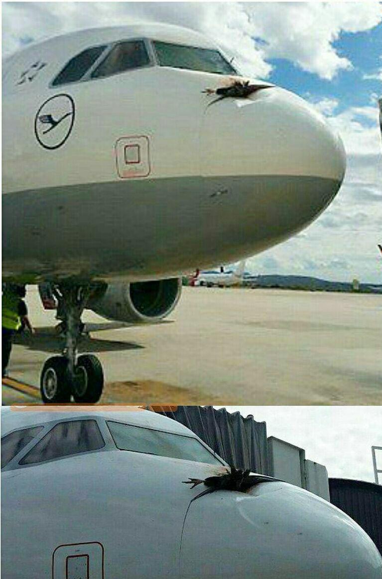 عکس/برخورد هواپیما با کرکس