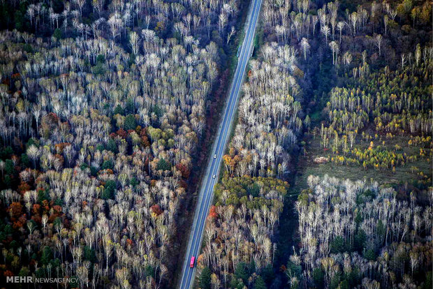 عکس/نمای هوایی از جنگل پاییزی