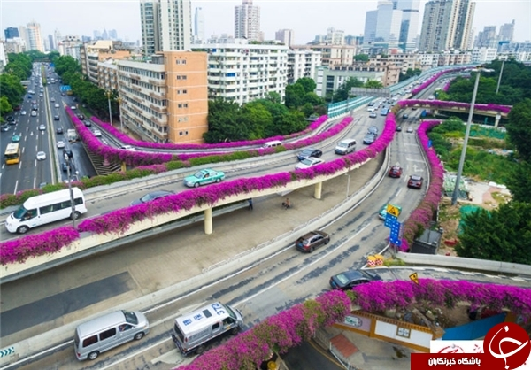 عکس گوانگجو عکس خلاقیت عکس چین اخبار چین ابتکار جالب