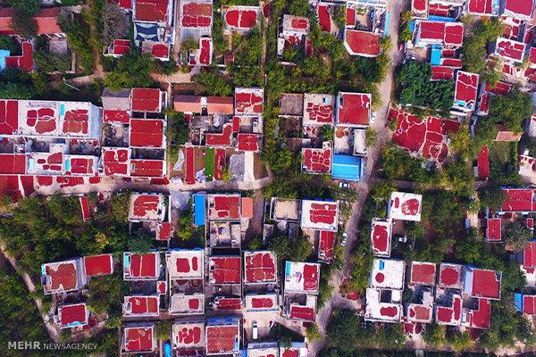 عکس/خشک کردن میوه در پشت بام چینی ها