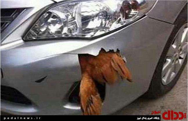 عکس/تصادف عجیب مرغ با خودروی لوکس