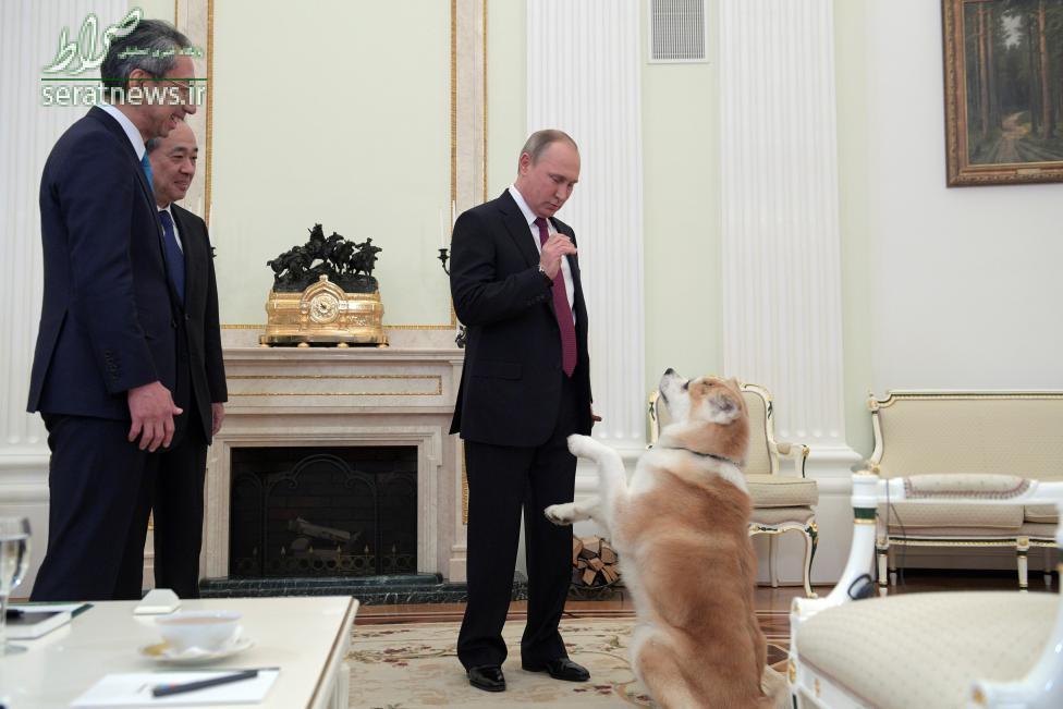 عکس/پوتین و سگش یومی