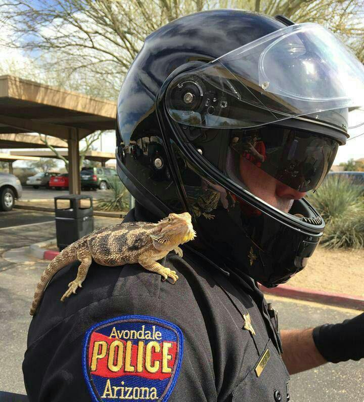 عکس/ مارمولکی که به استخدام پلیس درآمده است!