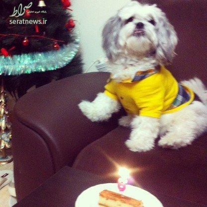 جشن تولد میلیونی برای سگ ها پدیده ای در پایتخت/ جشن تولد سالی، پسرم!