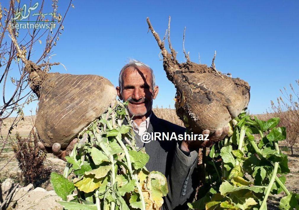 تولید تُرب عظیم الجثه در ایران +عکس