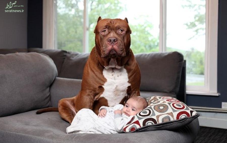کودک یک ساله توسط سگ خانگی تکه تکه شد +عکس