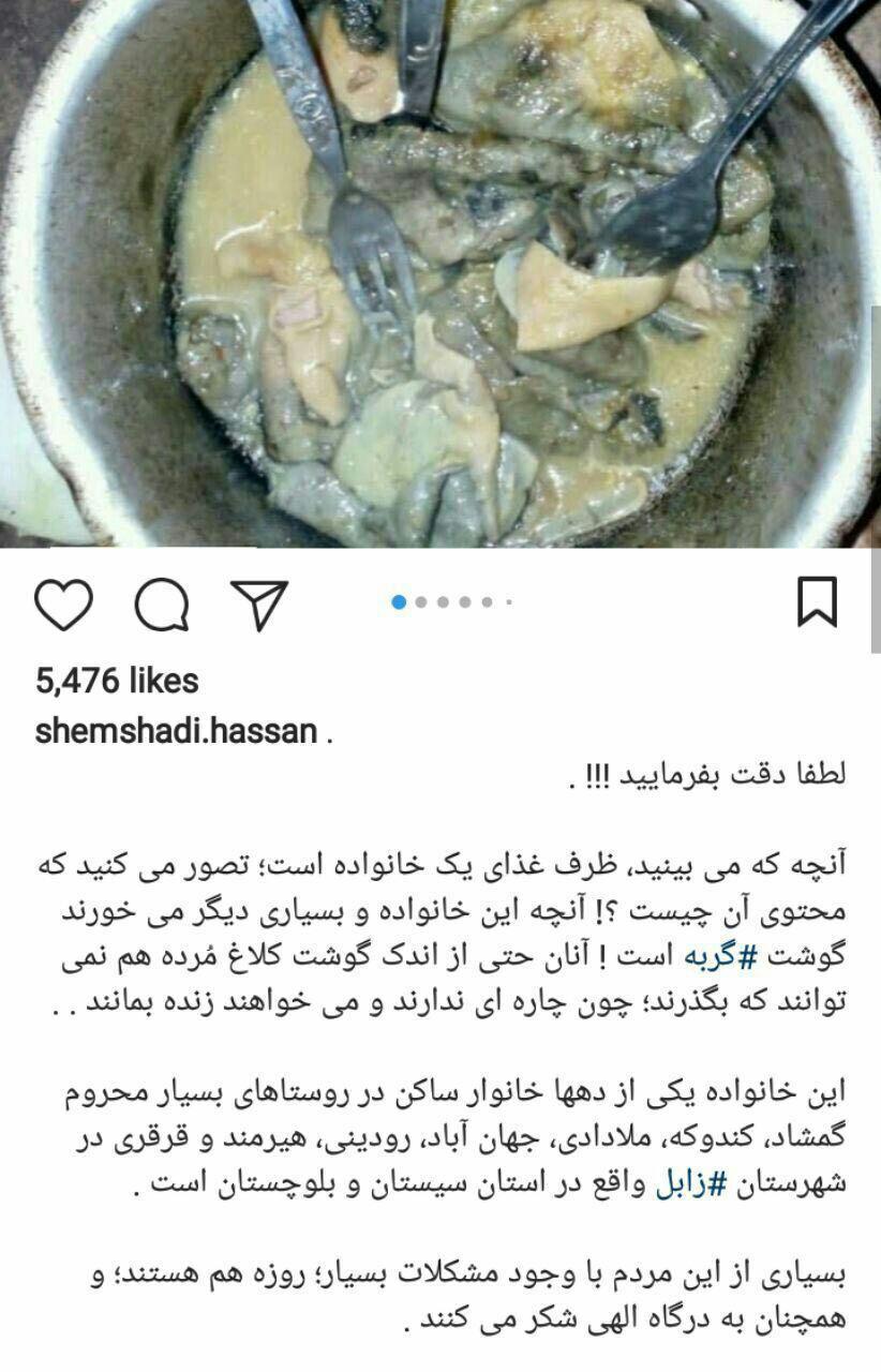 ماجرای خوردن گربه در جنوب ایران چیست؟