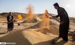 خرید تضمینی 9.5 میلیون تن گندم از کشاورزان