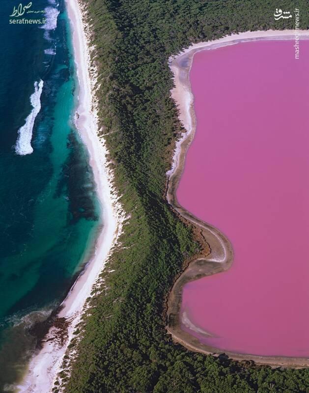 عکس/ دریاچه صورتی استرالیا